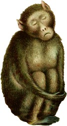 Diligence logo: sleeping monkey